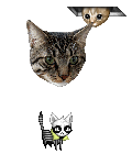 ccatman's avatar