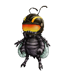 chatterbox fly