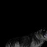 -HTM- Shadow's avatar